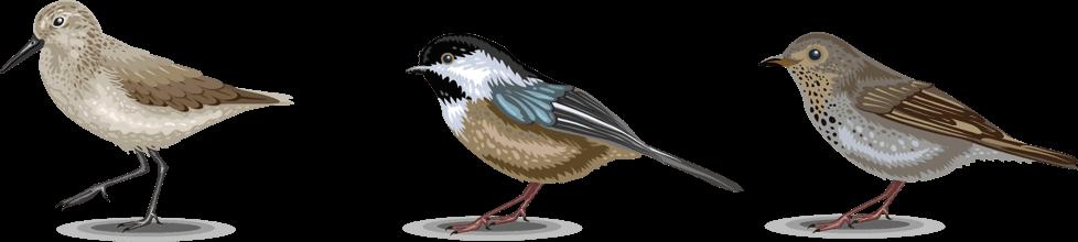 Иллюстрация птиц