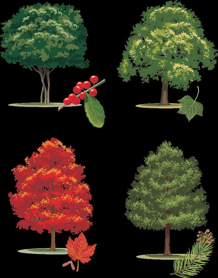 Иллюстрация деревьев